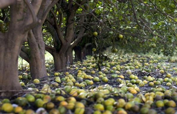 Hurricane Wilma Damages Florida Agriculture